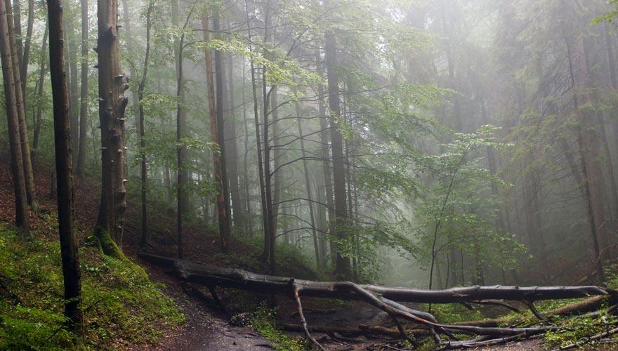 Slovensky Raj - forest